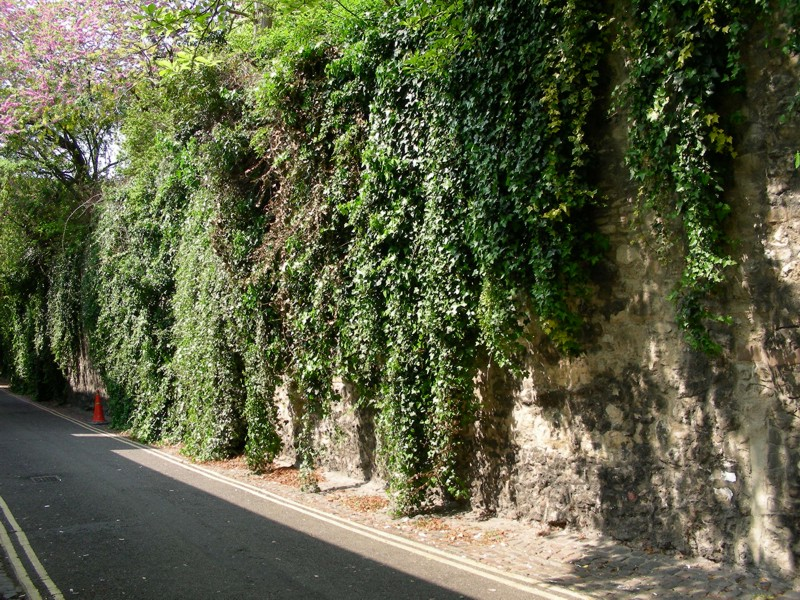 Gallery For Ivy Wall